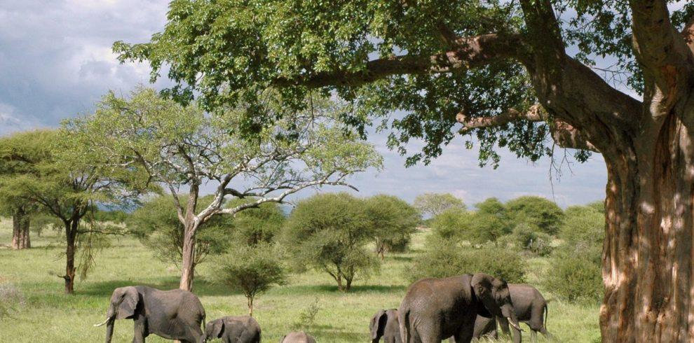 Elephants-africa-safari