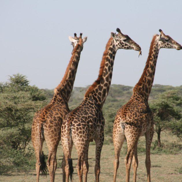 Karisia Walking Safaris Kenya