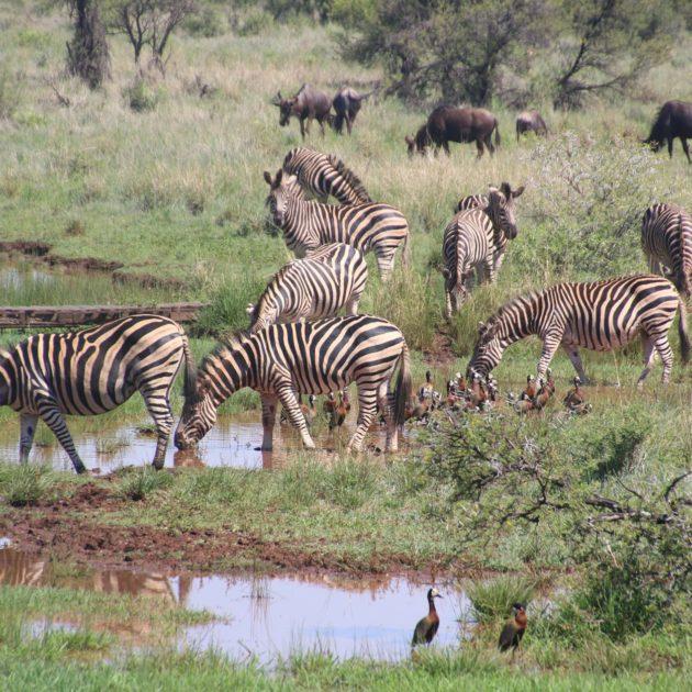 Tanzania Africa Safari